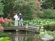 japan-garden.jpg
